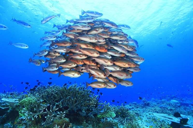的場も絶賛パプアニューギニア・トゥフィ2