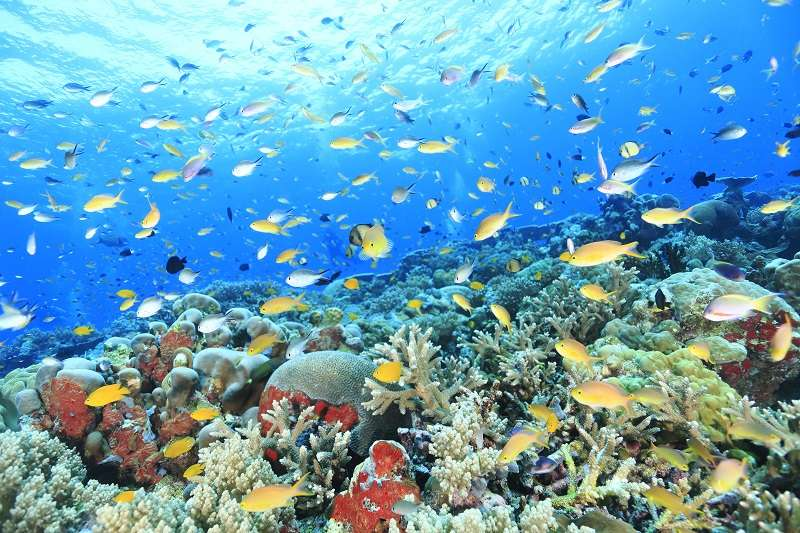的場も絶賛パプアニューギニア・トゥフィ写真