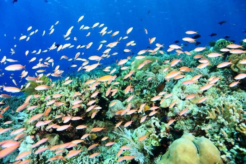 ❝インドネシア初の国立海洋公園でのんびりダイビング、メナド❞2