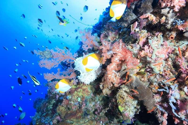 ❝インドネシア初の国立海洋公園でのんびりダイビング、メナド❞3