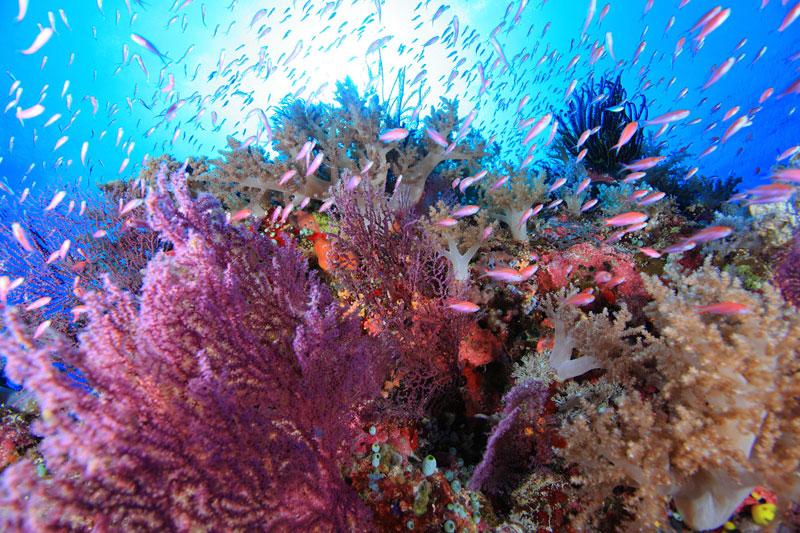 期間限定の海【世界遺産 トゥバタハ】1