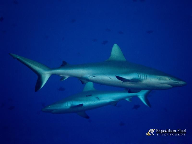 期間限定の海【世界遺産 トゥバタハ】写真