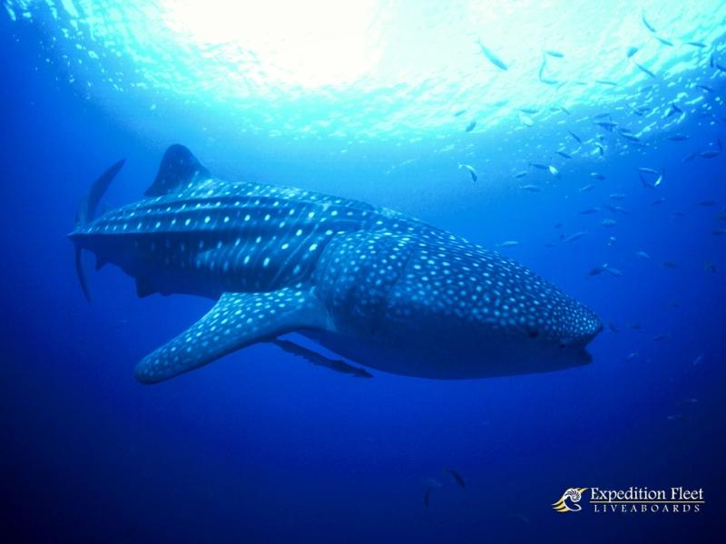 期間限定の海【世界遺産 トゥバタハ】4