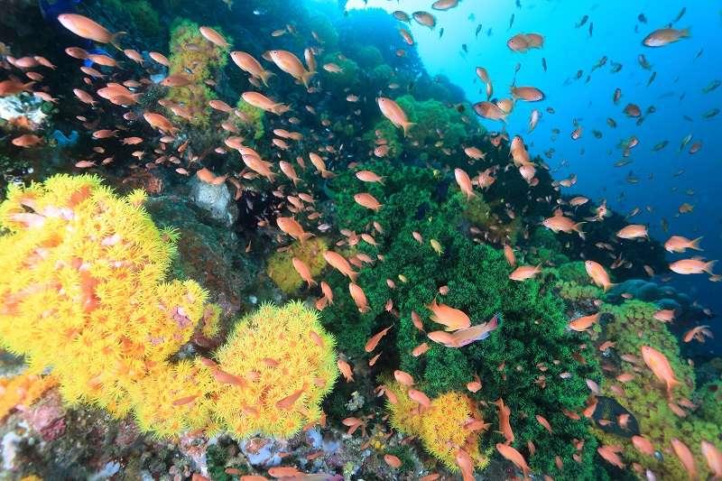期間限定の海【世界遺産 トゥバタハ】&【アニラオ】付プラン1