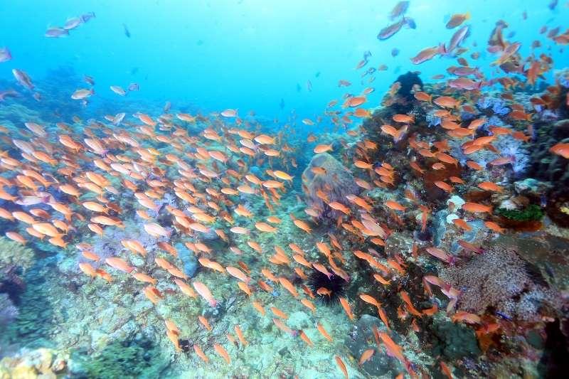 期間限定の海【世界遺産 トゥバタハ】&【アニラオ】付プラン2