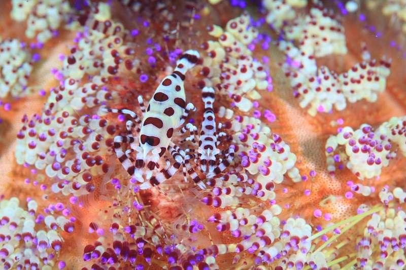 期間限定の海【世界遺産 トゥバタハ】&【アニラオ】付プラン写真
