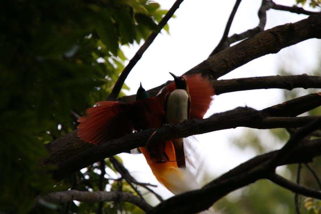 【インドネシアのガラパゴス?!】チェンデラワシクルーズ写真