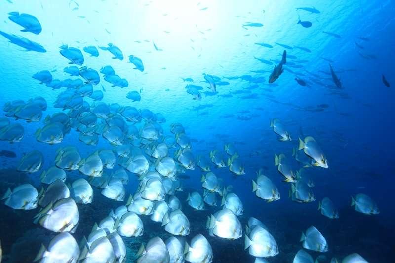 奇跡の豊穣な海❝ラジャアンパット❞写真