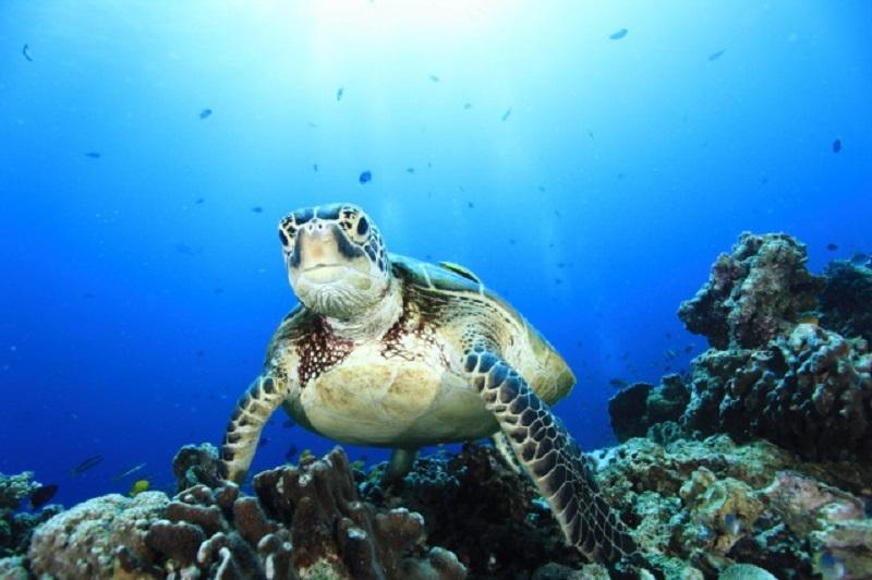 エキサイティングに楽しめる海ボホール2