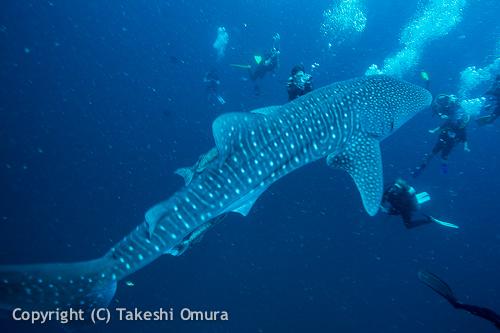 タオ島の海はどんな海??1