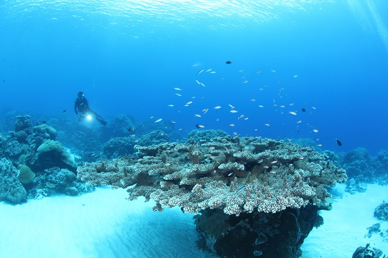 ミクロネシアの宝石と呼ばれる島!コスラエ!写真