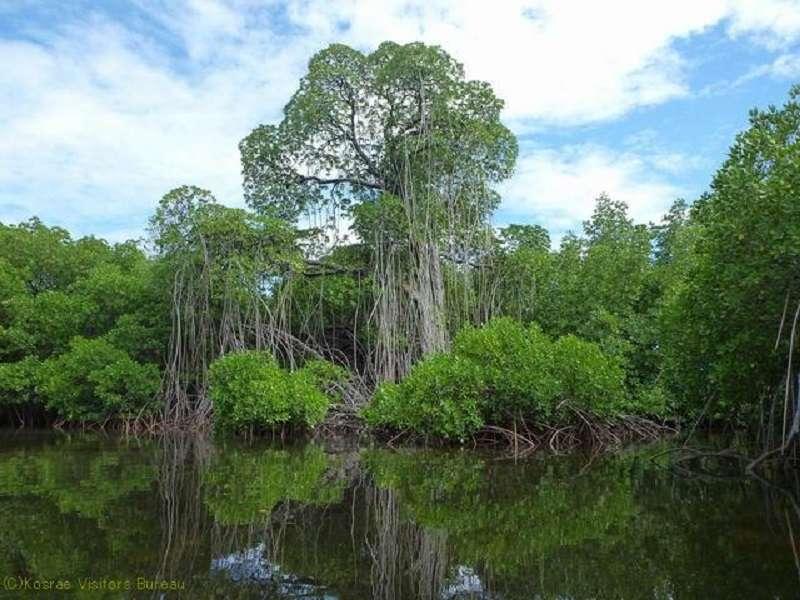 ミクロネシアの宝石と呼ばれる島!コスラエ!5