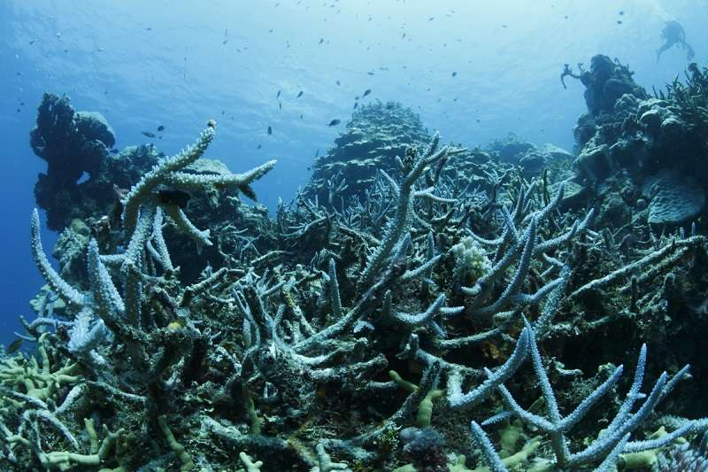 サンゴに彩られた沈船のが魅了のチューク!!写真