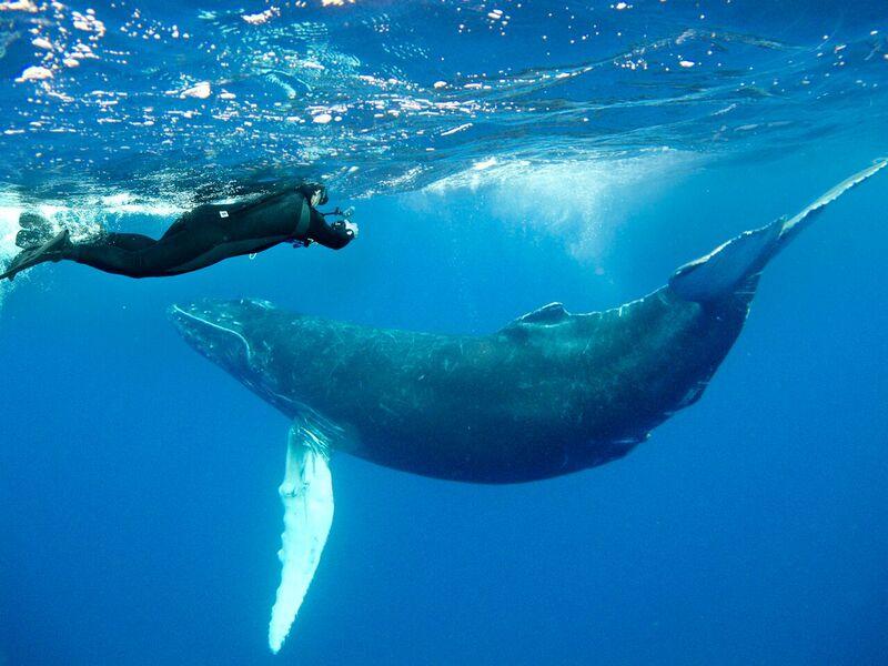 【絶海の孤島】ソコロ諸島4