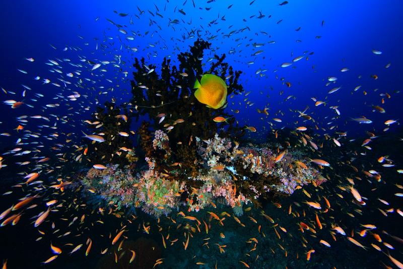 まだ間に合う!年末年始はモルディブのマーフシ島へ!1