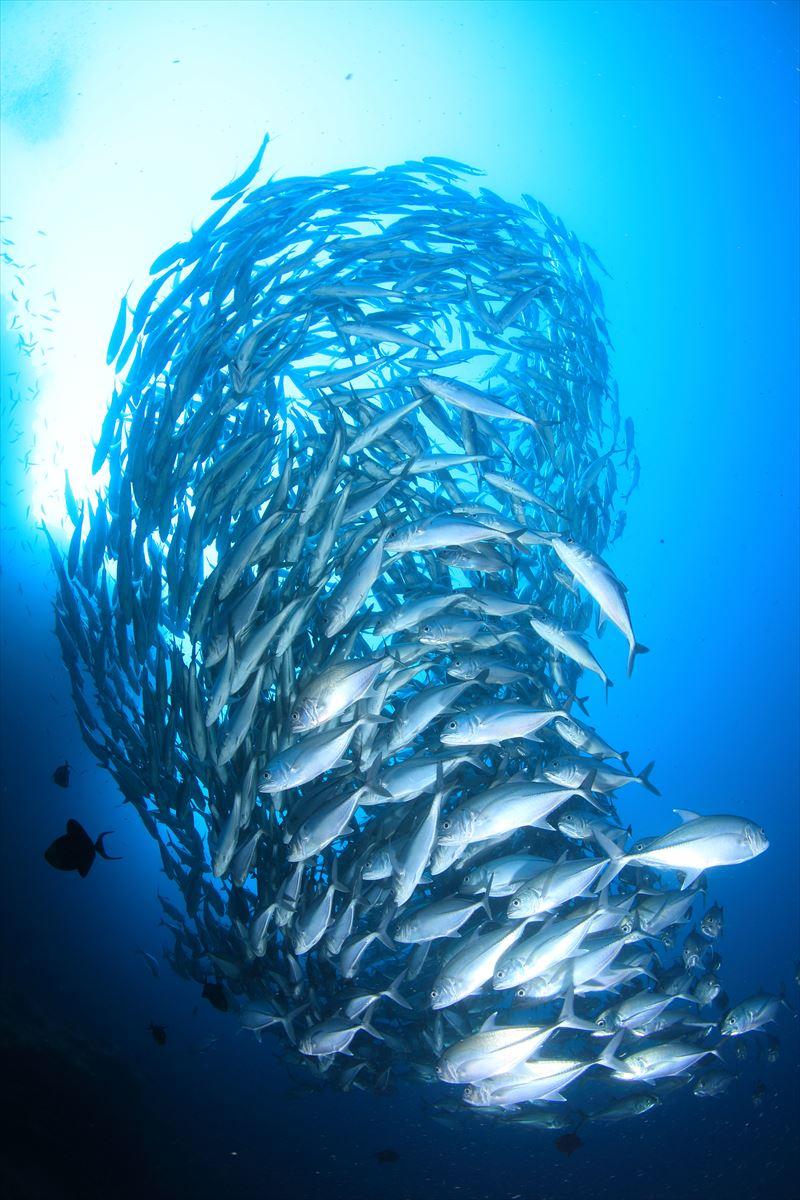 バリカサグまでボートで30分!!最高の立地で最高のダイビングを!
