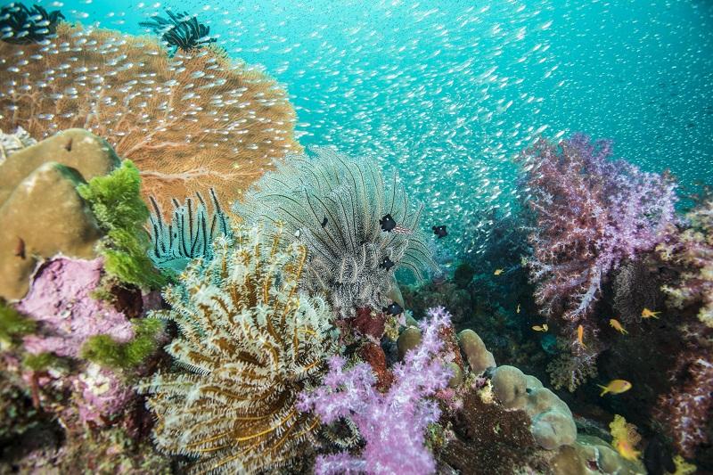 ベストシーズン到来!9つの美しい島からなる『シミラン諸島』