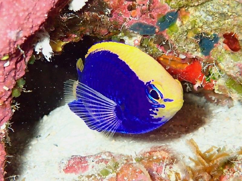【西表島】日本一の珊瑚礁を楽しめる海!!