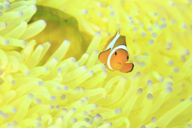 驚きの海 コモド諸島クルーズ1