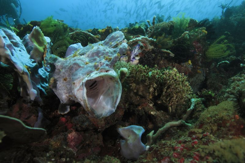 驚きの海 コモド諸島クルーズ2