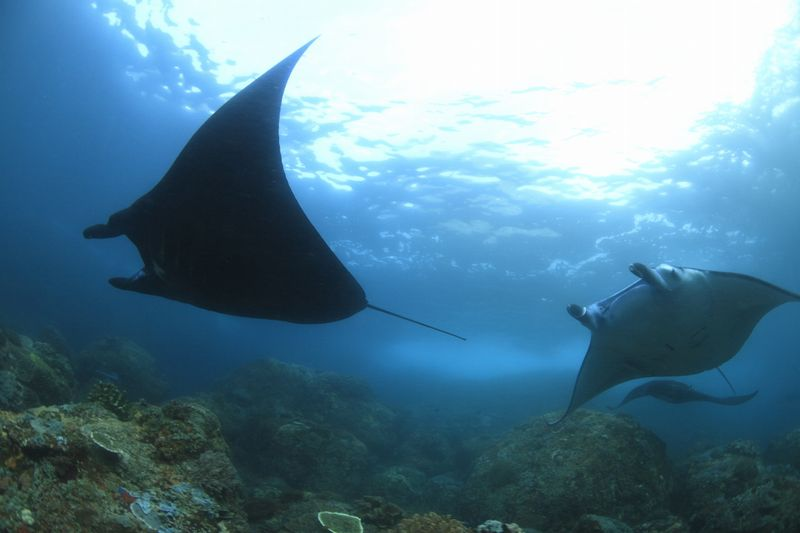 驚きの海 コモド諸島クルーズ写真