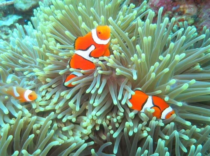 夏よりうれしい週2便!パプアニューギニア・ワリンディ !写真