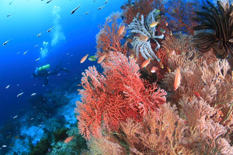 【インドネシア】ハンマーリバーバンダ海&マクロの秘宝 アンボン クルーズ写真