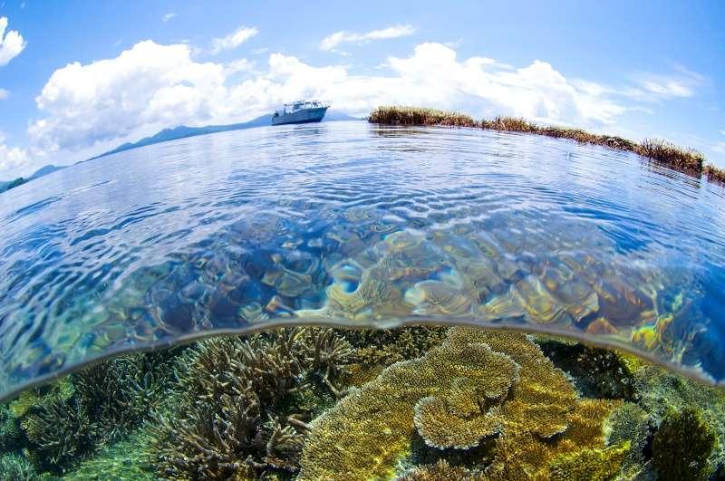 今!注目の秘境!!年末パプアニューギニア!写真