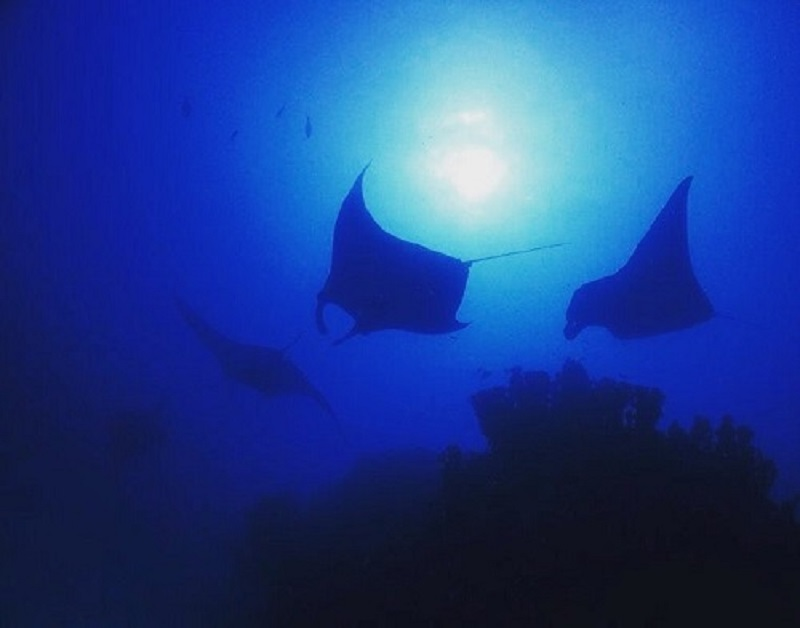 ☆第十七弾★名物ガイド紹介☆ ~ポナペ/PIA Diving Service CLUB PAREO~写真