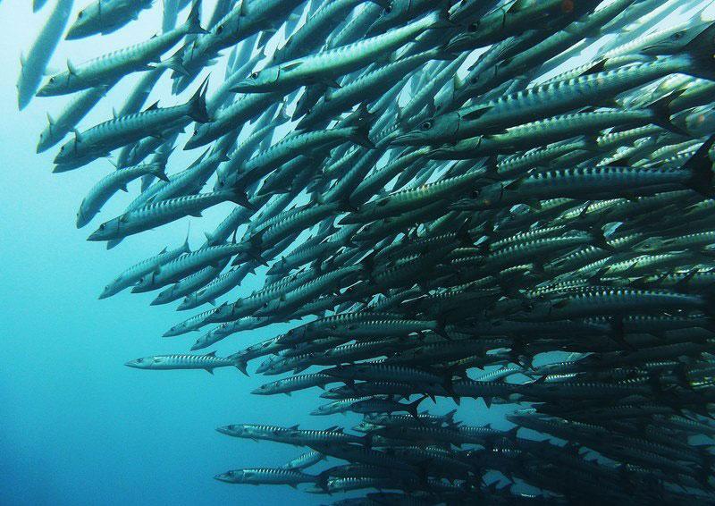 ☆第二十弾★名物ガイド紹介☆ ~パプアニューギニア・マダン/Niugini Dive Adventures ~写真
