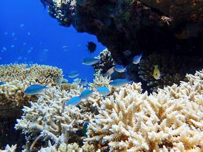 **年末年始をモルディブで過ごしたい方必見!!ローカル島滞在**写真