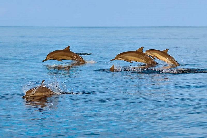 **年末年始をモルディブで過ごしたい方必見!!ローカル島滞在**3