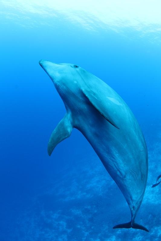 ♫第5弾♫この生物を見たいならココ イルカ編写真