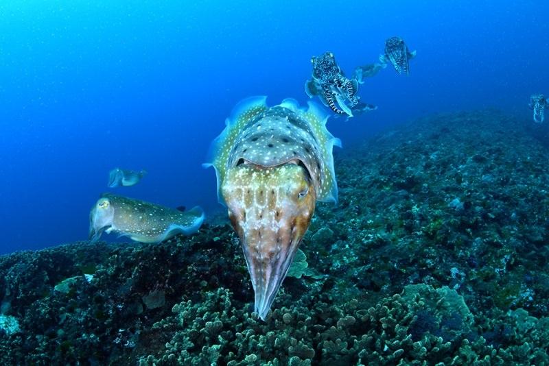 温帯と亜熱帯の生物が混在する不思議な海へ<屋久島>1