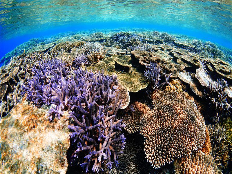 息を呑むほどの透明度!圧巻のサンゴ礁<伊是名島>3