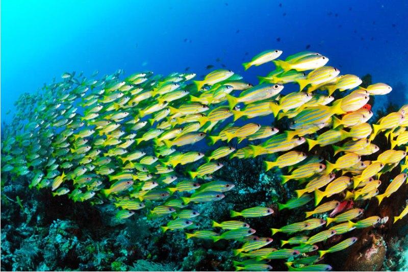 正に秘境!水中は海洋生物の宝庫【ラジャアンパット】3