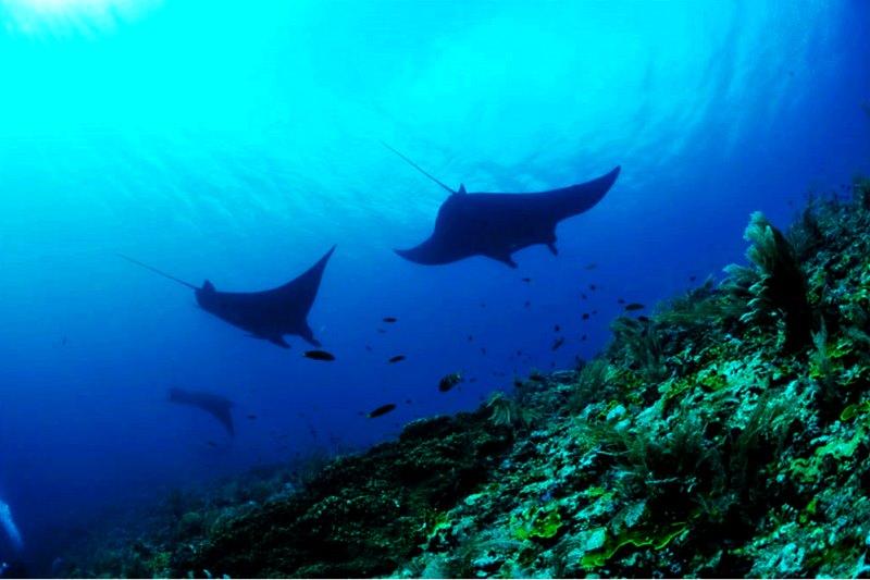 正に秘境!水中は海洋生物の宝庫【ラジャアンパット】2