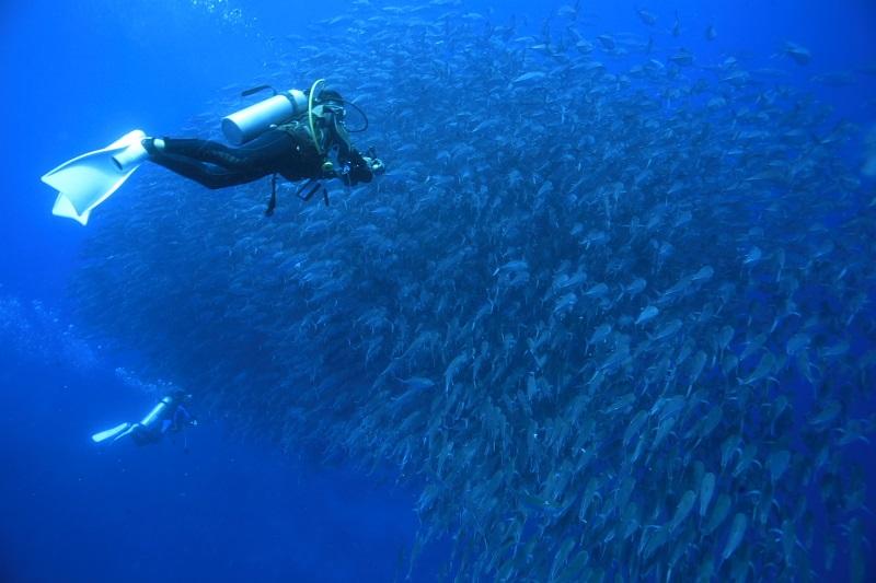 エキサイティングに楽しめる海ボホール写真