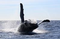 クジラに会いたい方必見のおすすめエリア!写真