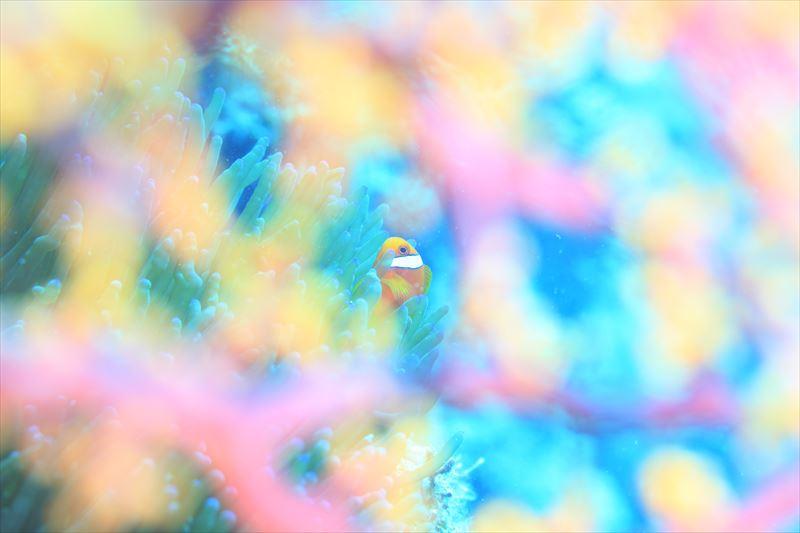 ギンガメアジやパラクーダの群れに出会える☆バリカサグ☆写真