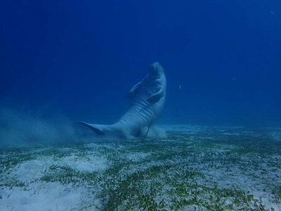 ジュゴンに会える海があるのです!!それは・・・写真