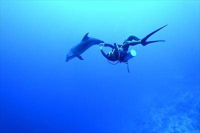 ランギロアでイルカとダイビング!!!!写真