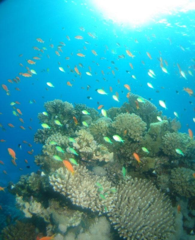レッドシー(紅海)のダイビング14-1