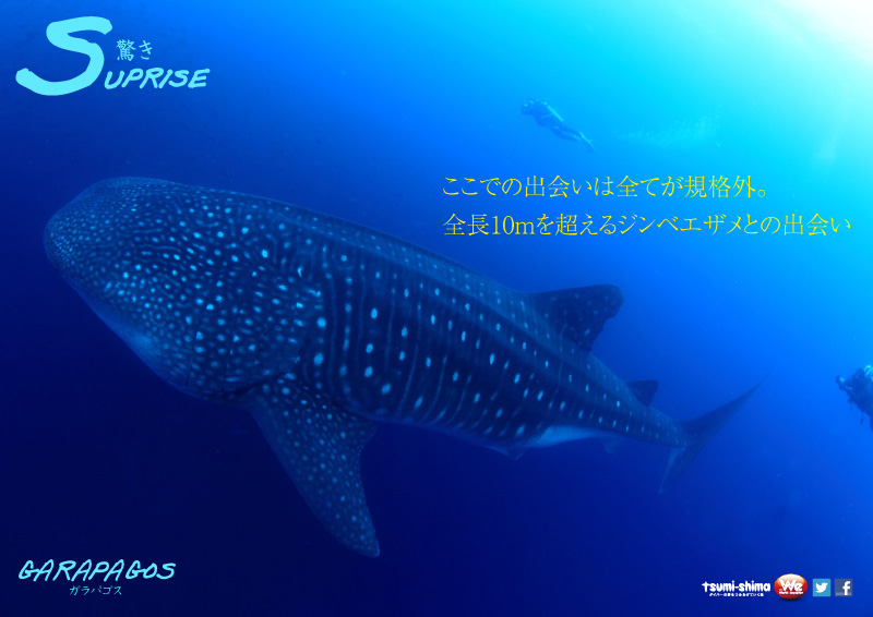 成田発 アメリカン航空 ガラパゴス諸島  最大21ダイブ付 12日間9