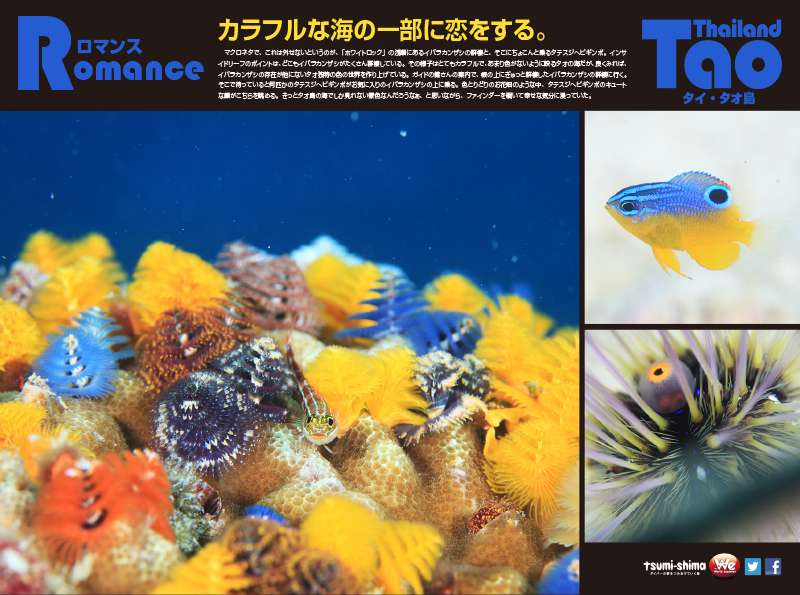 成田発 タイ国際航空 タオ  最大10ダイブ付 6日間7