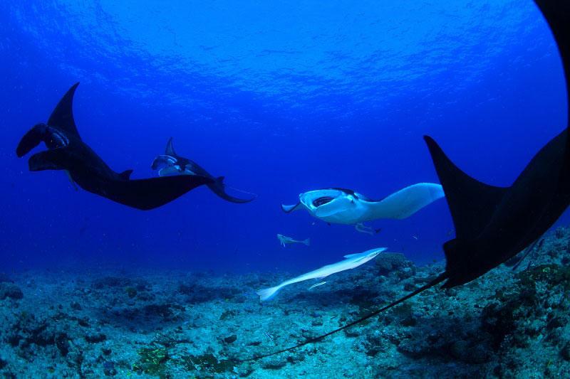 ニューカレドニア ダイビング情報6-1
