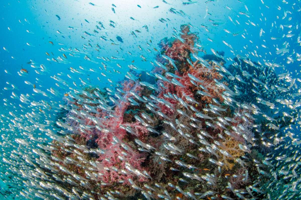 アンダマン海に浮かぶ宝石シミラン諸島 世界中のダイバーの憧れ・・・12-2