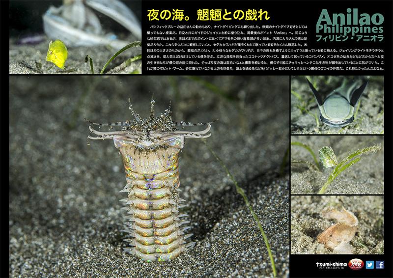 羽田発 全日空 アニラオ  最大5ダイブ付 4日間12