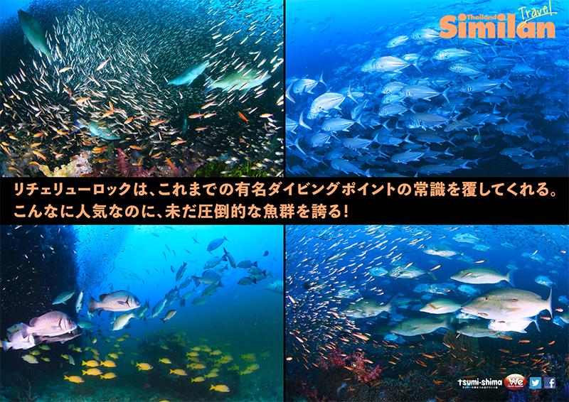 関西発 タイ国際航空 シミラン  最大12ダイブ付 6日間11
