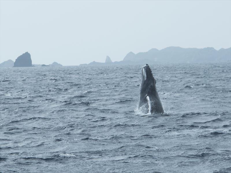 小笠原のダイビング情報14-1